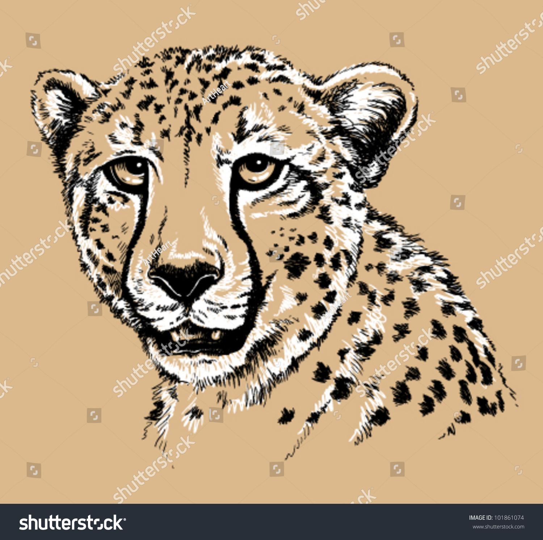 黑色和白色矢量线条画的猎豹的脸-动物/野生生物,自然图片