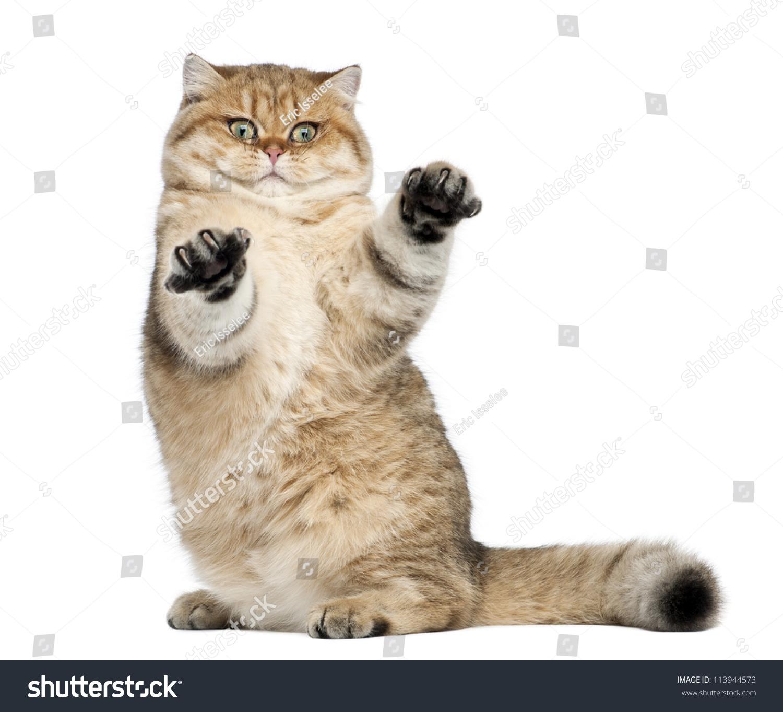 壁纸 动物 猫 猫咪 小猫 桌面 1500_1364