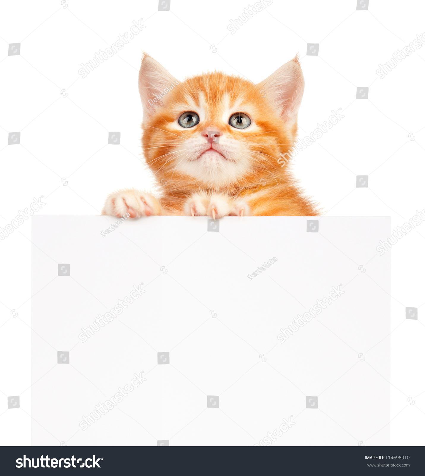 壁纸 动物 猫 猫咪 小猫 桌面 1431_1600
