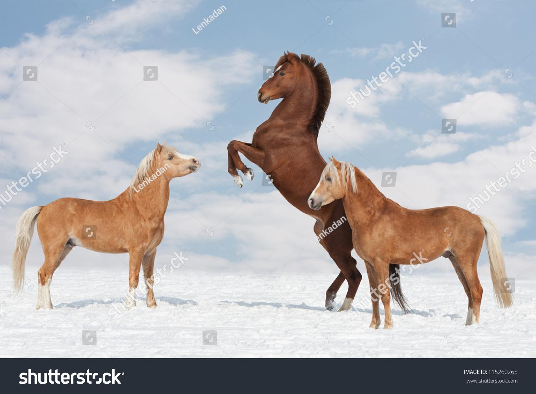 2017微信头像动物马