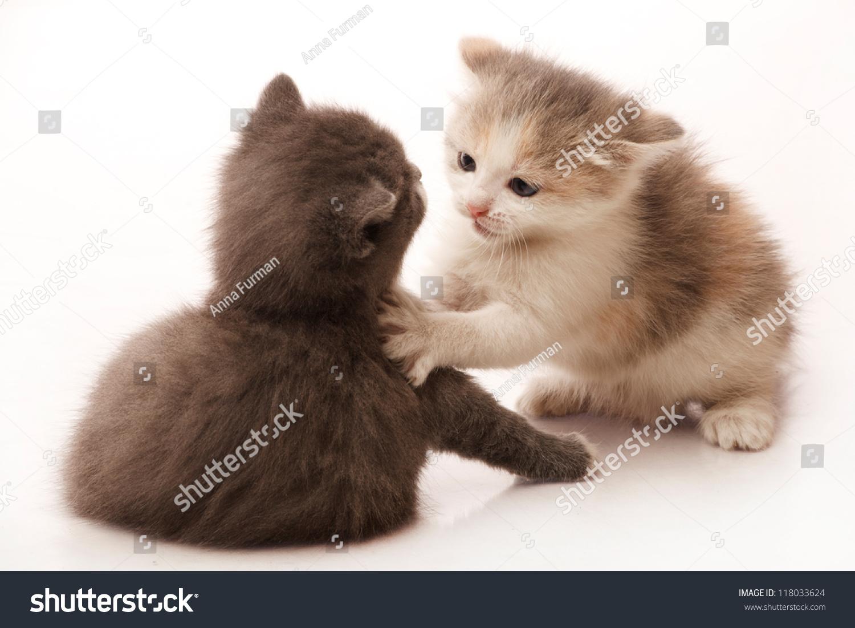 小1个月大的小猫在战斗和玩耍-动物/野生生物-海洛()