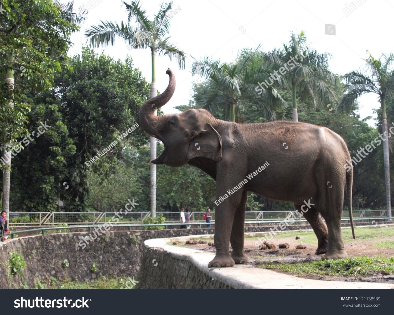 大象在动物园-动物/野生生物,自然-海洛创意(hellorf)