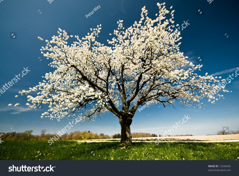 春天的一棵开花的树.-公园/户外,自然-海洛创意()-合.