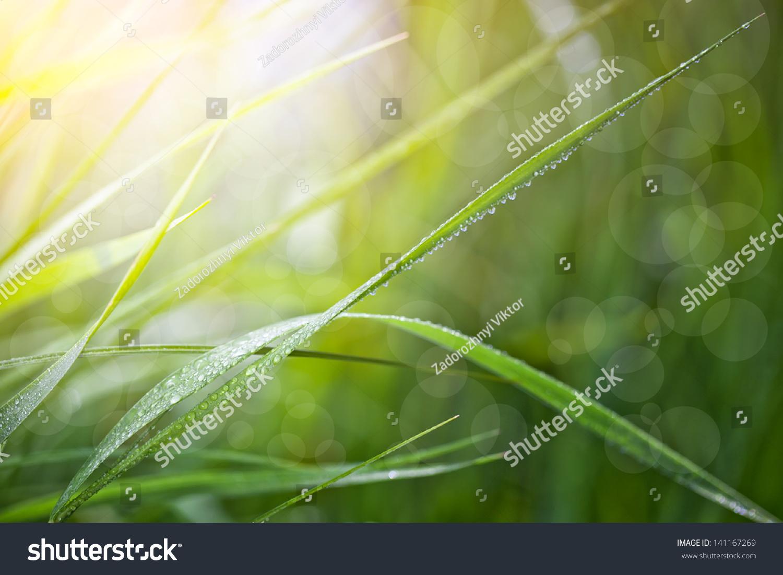 微信头像树叶水滴
