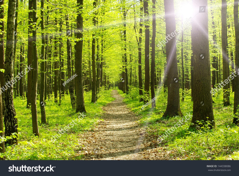 树木在春天一个绿色的森林里-自然