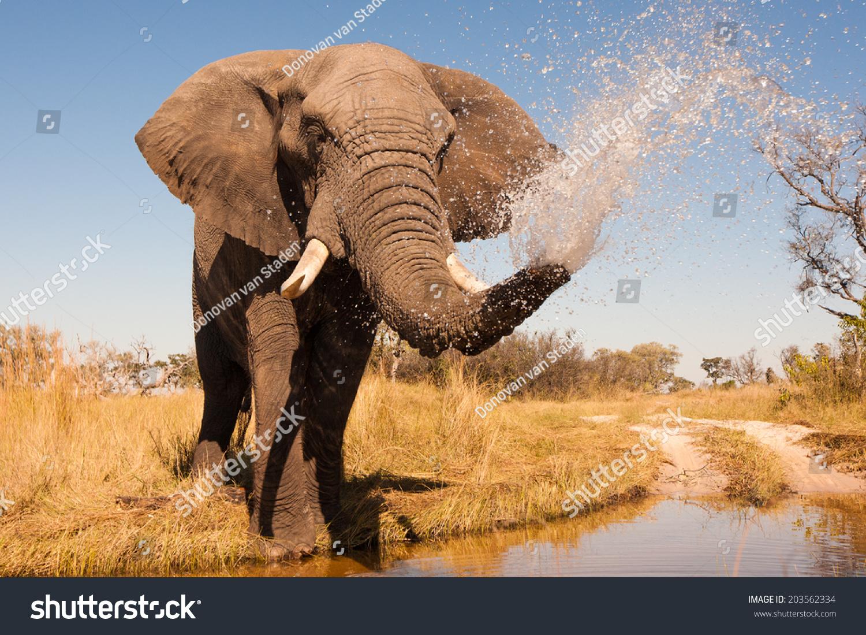 壁纸 大象 动物 1500_1100