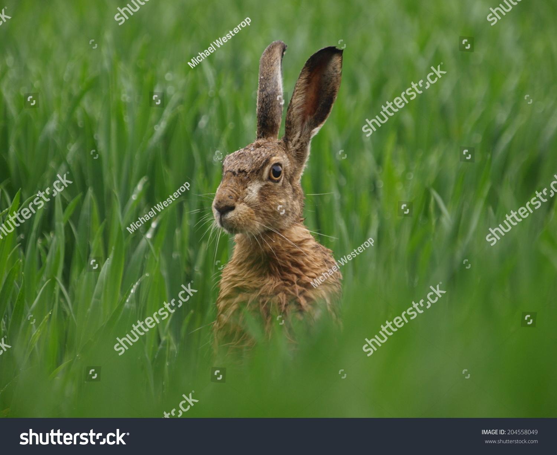 兔子-动物/野生生物,自然-海洛创意(hellorf)-中国