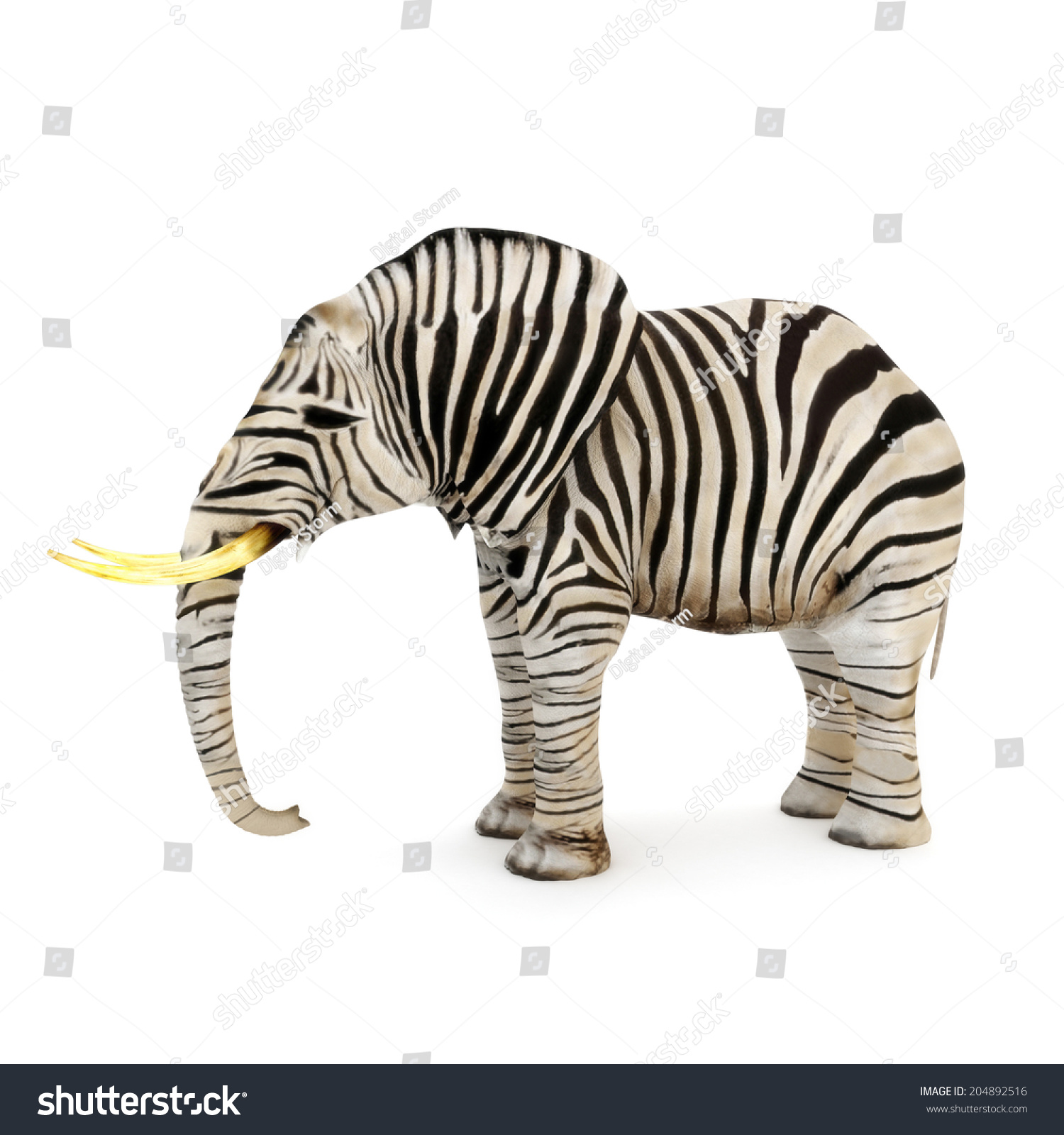 不同,大象和斑马条纹在白色的背景.-动物/野生生物