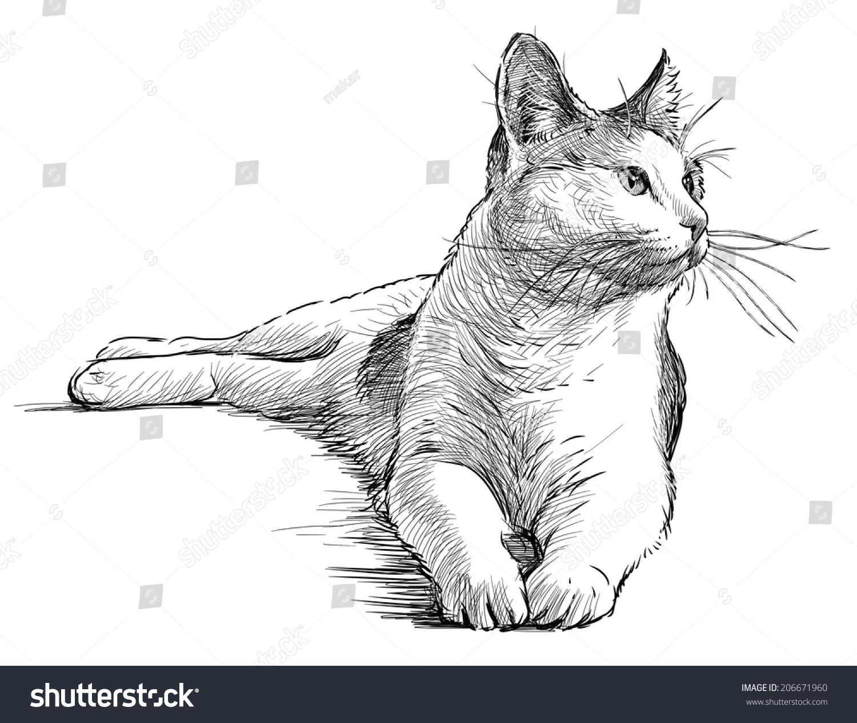 保护小动物铅笔画