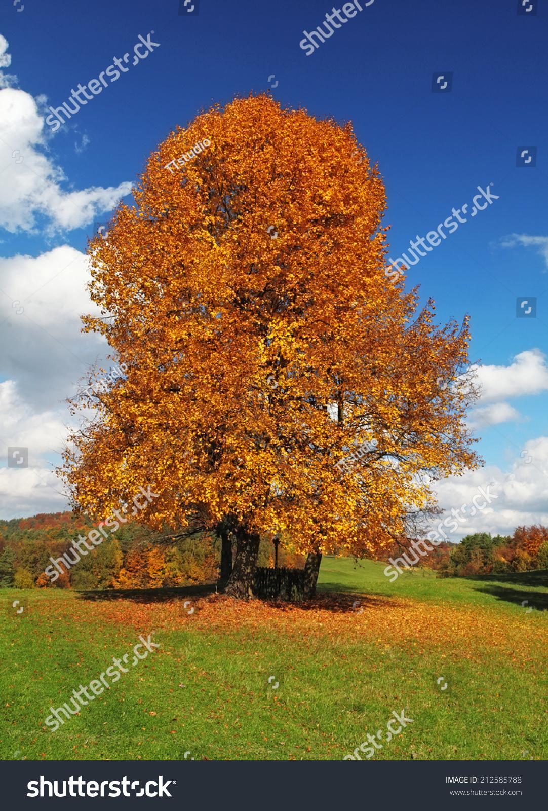 秋天的风景.-自然,公园/户外