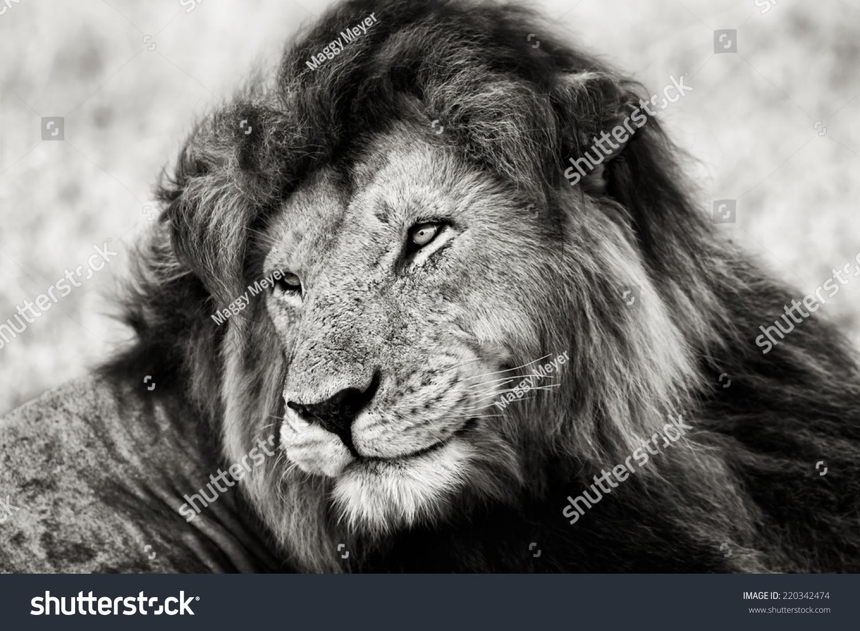 传说中的狮子口,马赛玛拉的黑白肖像