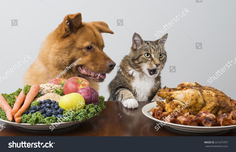 狗和猫选择肉类与蔬菜和水果-动物/野生生物,食品及