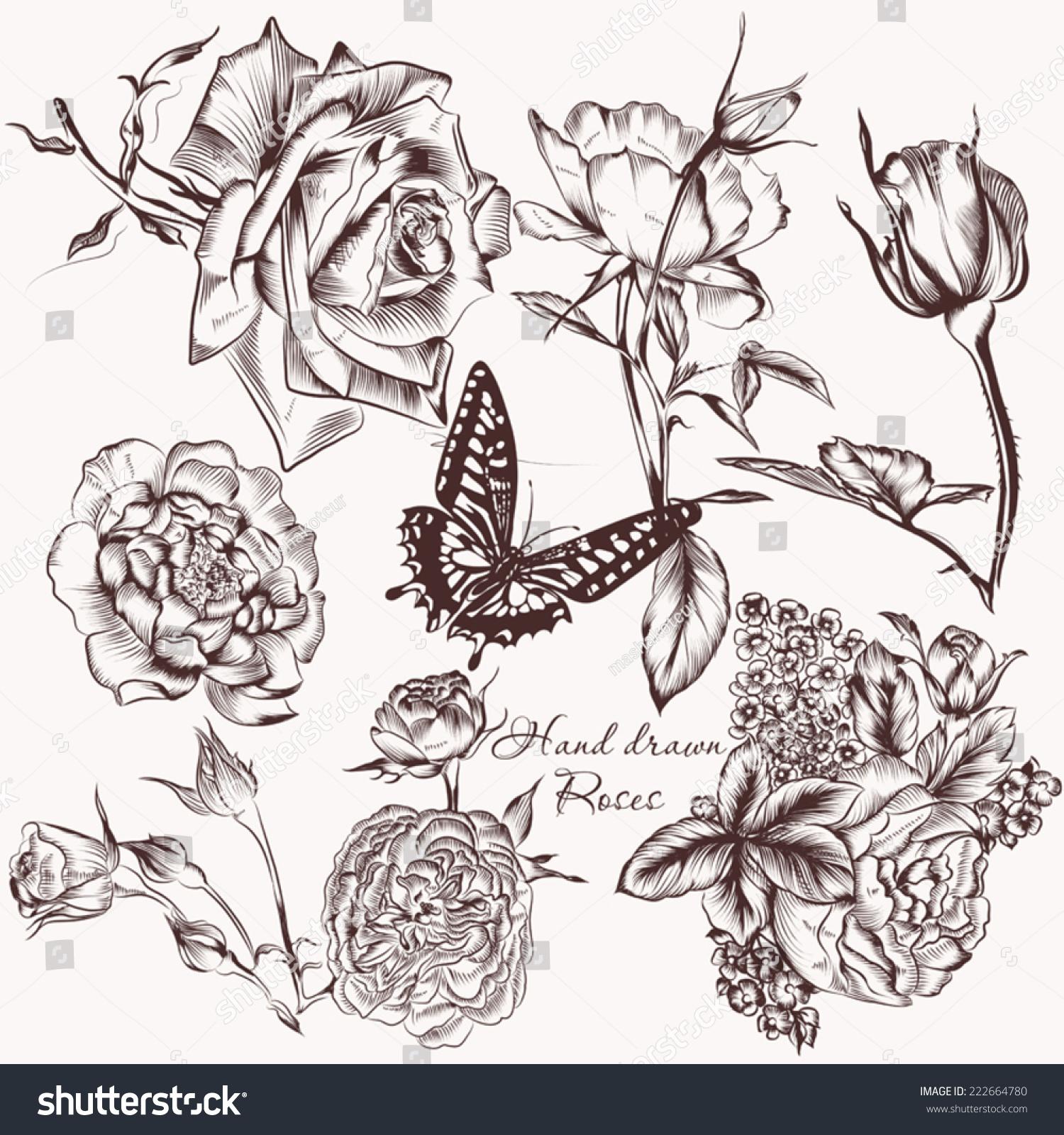 高详细向量玫瑰花朵设计的集合-动物/野生生物,自然