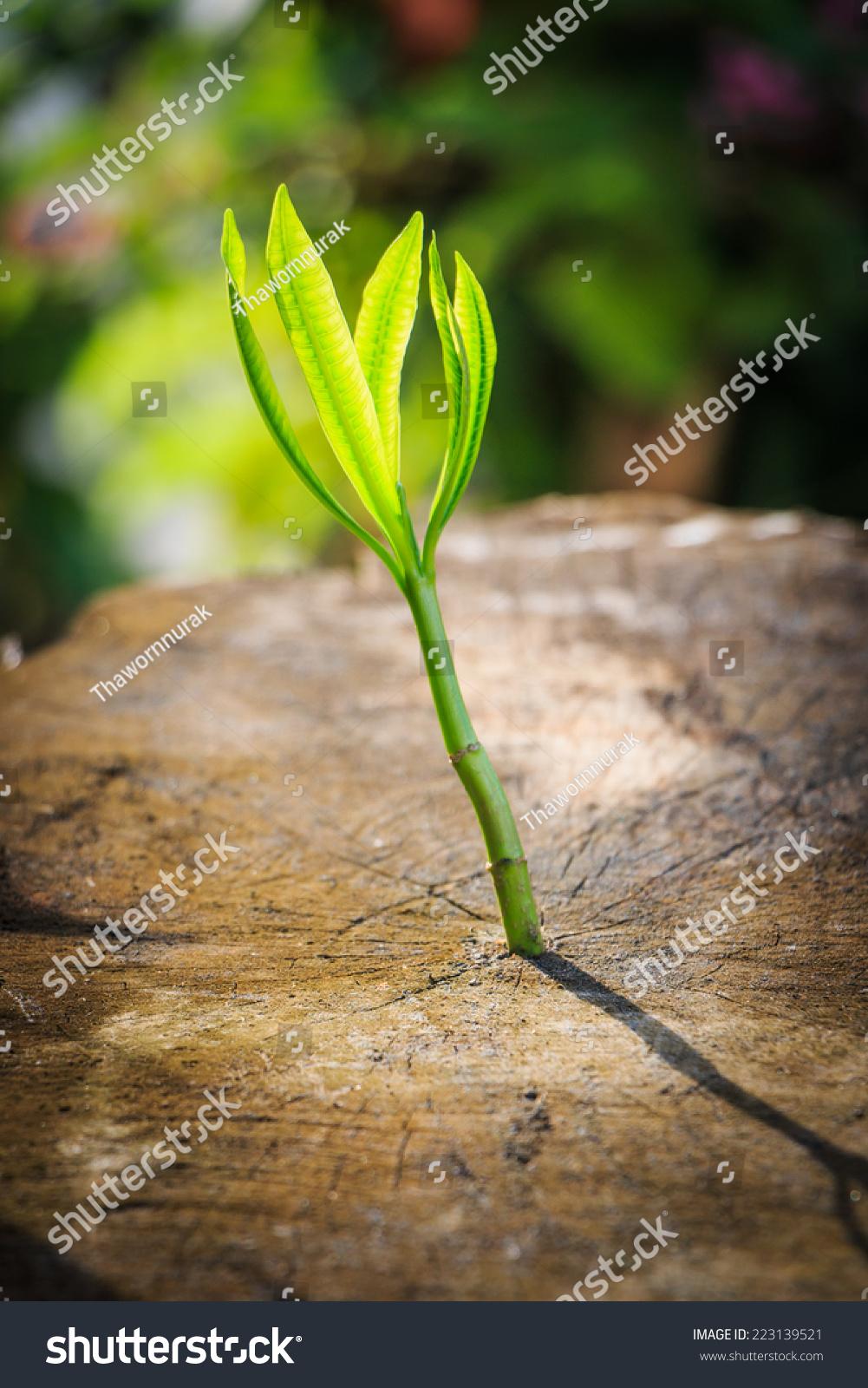 新的树木生长在死树可以成功的经营理念-商业/金融