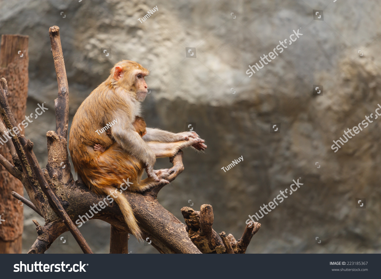 猴子在树枝上休息