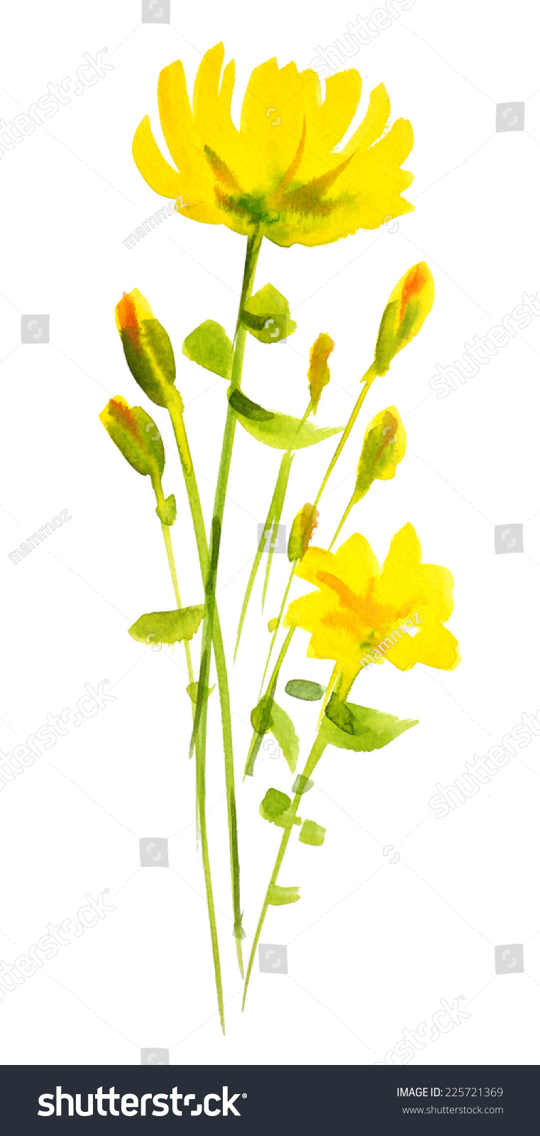 黄花水彩手绘,孤立在白色的-艺术,自然-海洛创意()-合