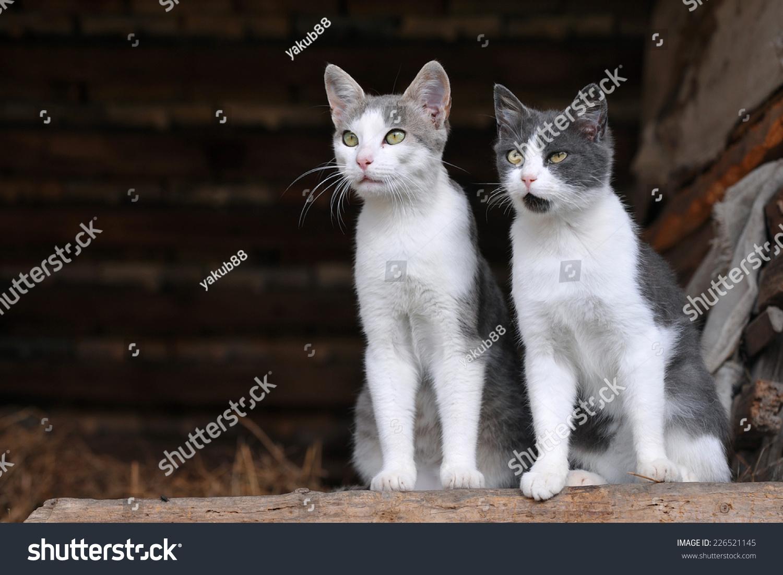 两只可爱的猫-动物/野生生物-海洛创意(hellorf)