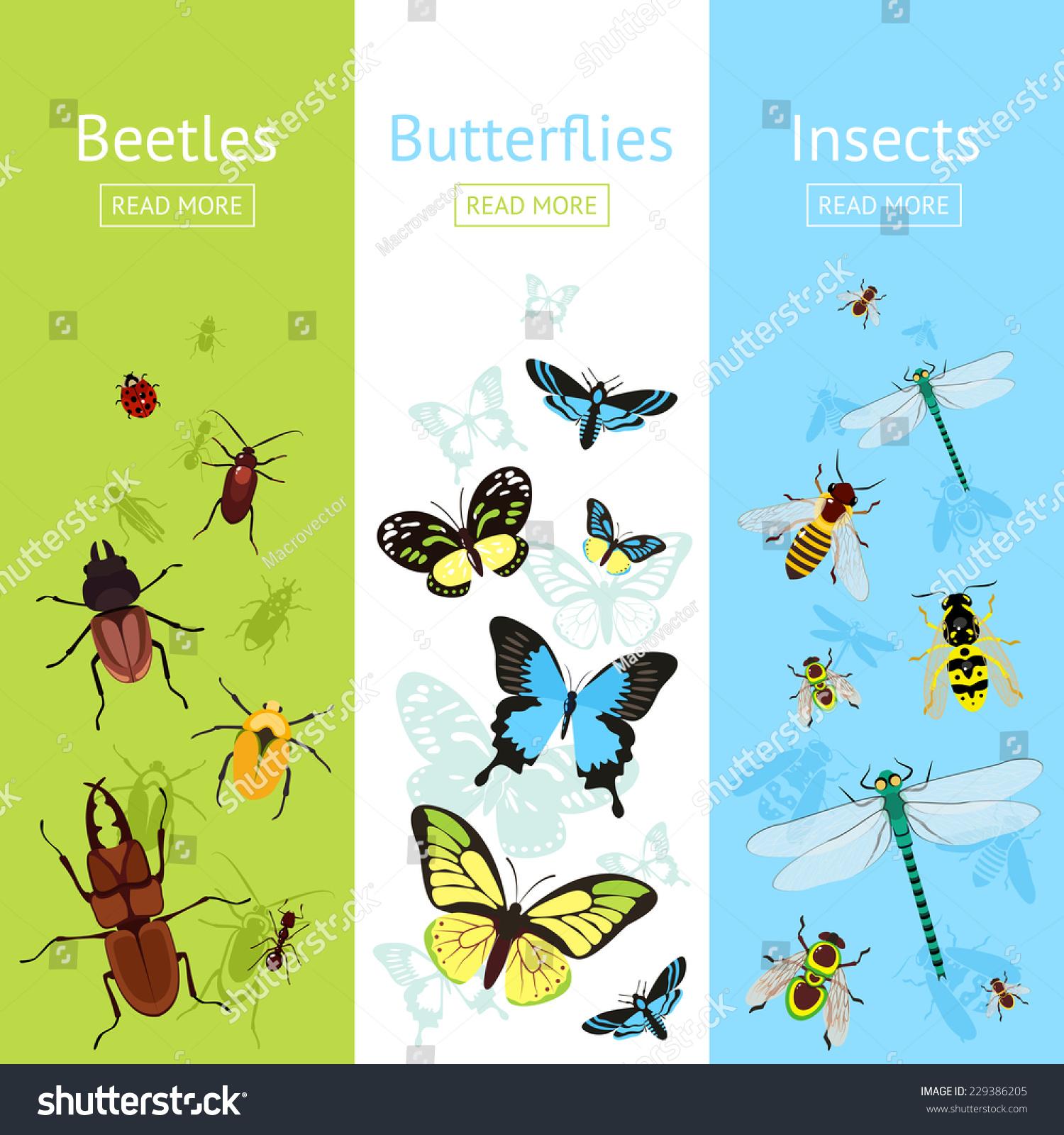 蝴蝶孤立的矢量图