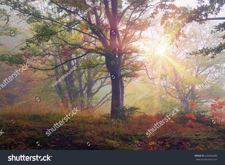 高山秋天,风景美丽的喀尔巴阡山脉的森林里日出雨后的图片