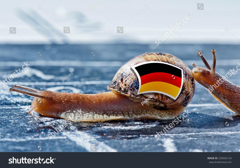 蜗牛与德国国旗的颜色受到另一个国家-动物/野生生物