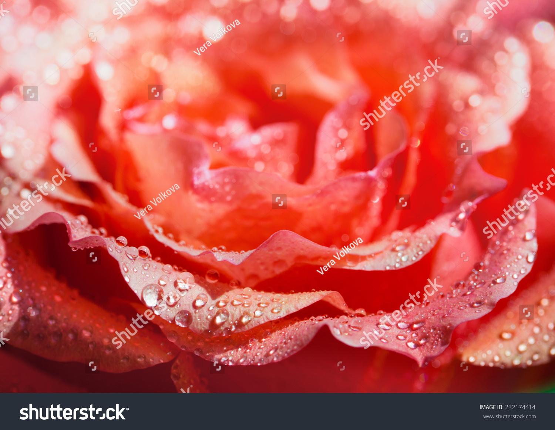 玫瑰花瓣背景-背景/素材,自然-海洛创意(hellorf)--.