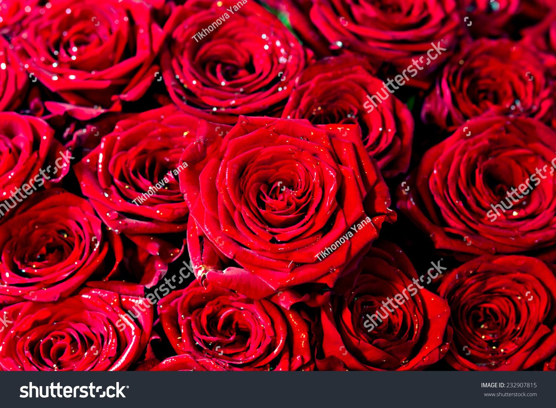 红玫瑰-背景/素材,自然-海洛创意(hellorf)-中国独家