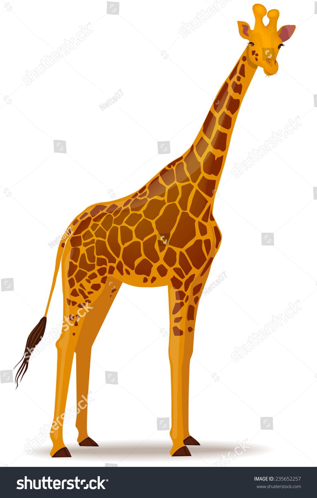 长颈鹿的矢量图示-动物/野生生物-海洛创意(hellorf)