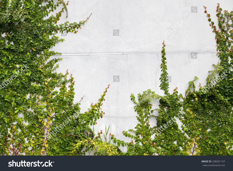 绿色爬行植物在白色的墙上-背景/素材-海洛创意()-合.