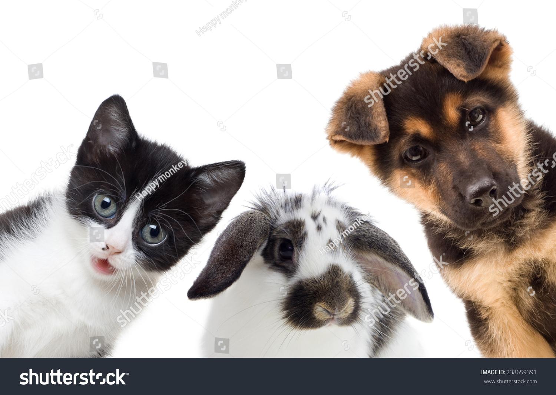 小狗和小猫,兔子-动物/野生生物-海洛创意(hellorf)-.