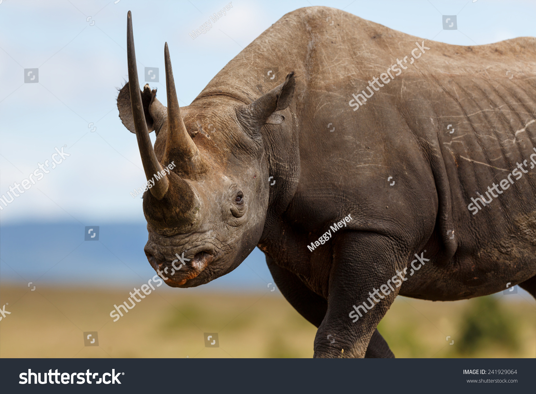 壁纸 大象 动物 犀牛 野生动物 1500_1100