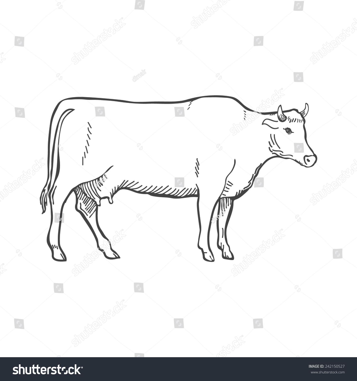 手画牛轮廓矢量图-动物/野生生物