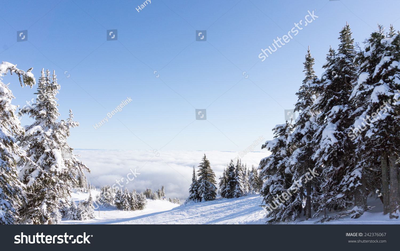 冰雪覆盖的高山松树加拿大西部