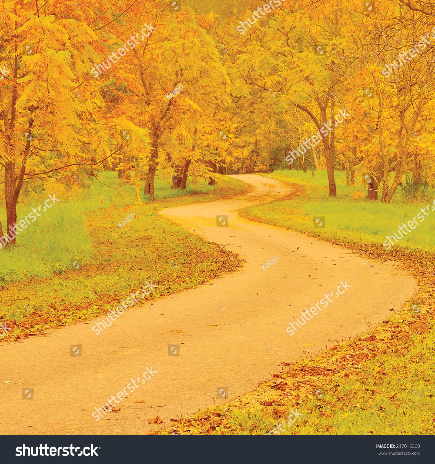 胡桃树小径秋天色彩鲜艳的黄色红叶大量详细的户外老图片