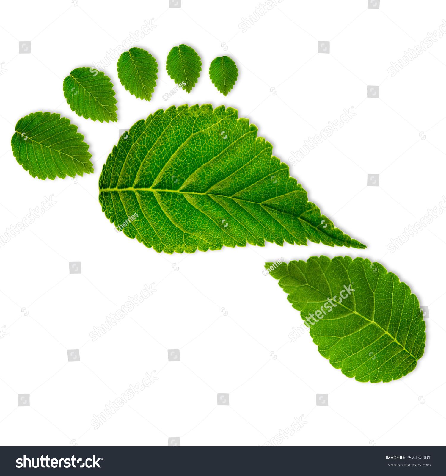 背景 壁纸 绿色 绿叶 树叶 植物 桌面 1500_1600