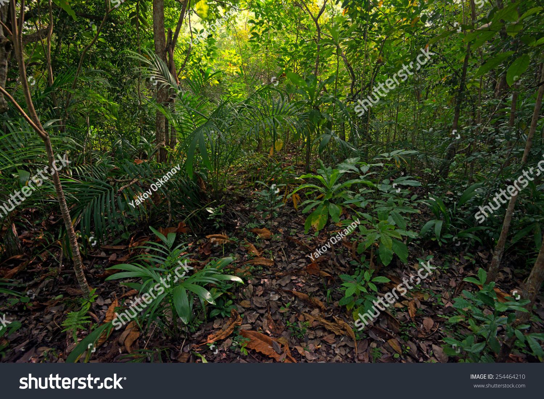 风景美丽的非洲丛林茂密的树叶