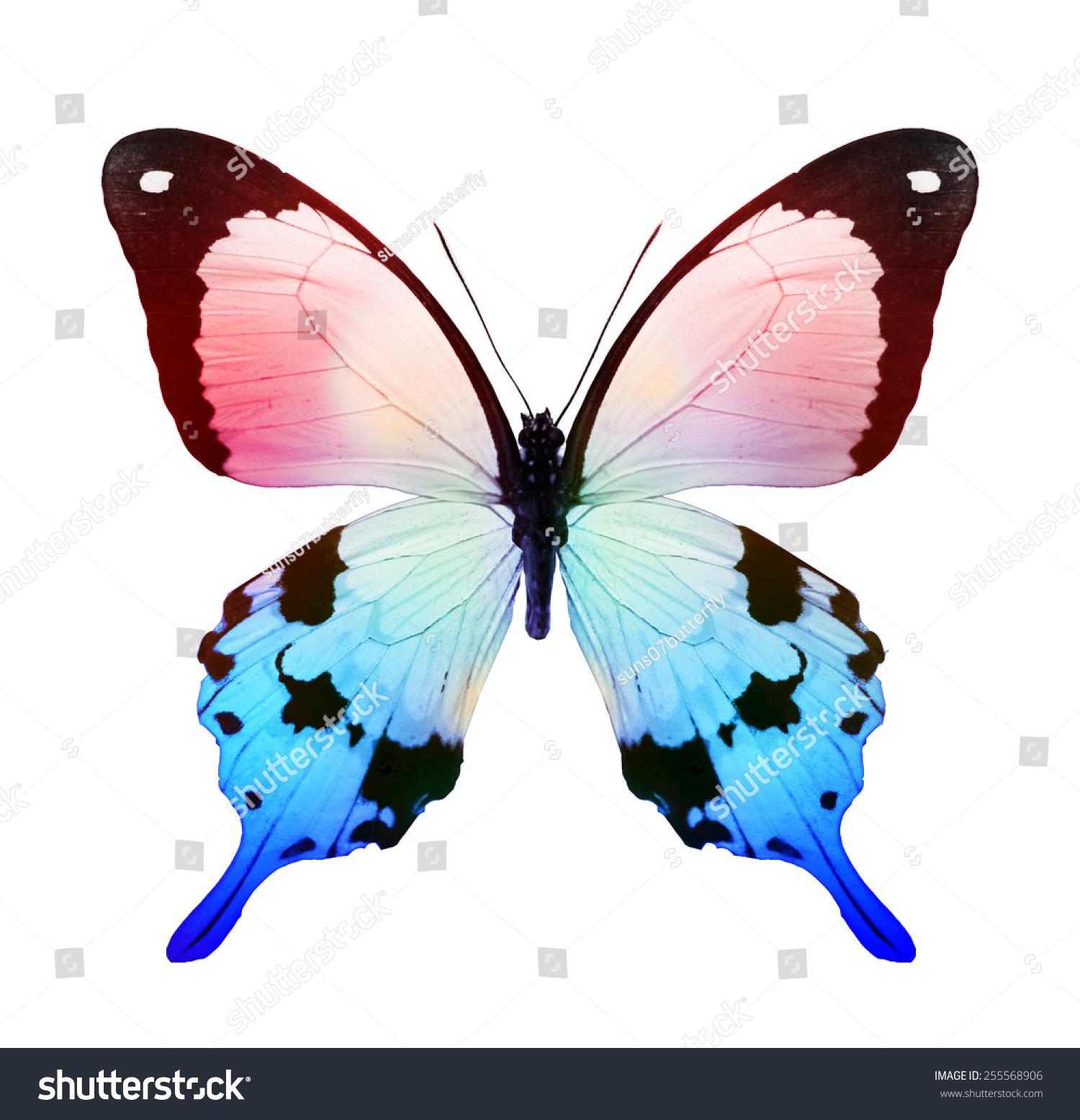 颜色热带蝴蝶,孤立在白色的-动物/野生生物