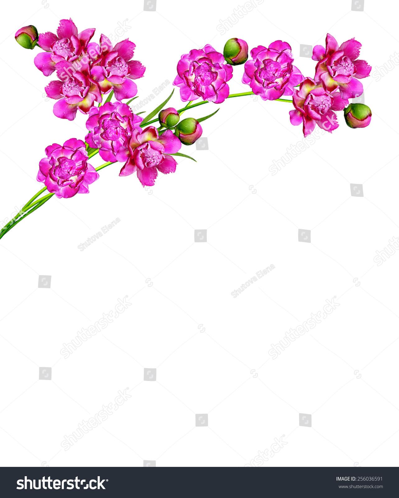 ppt竖版素材花朵