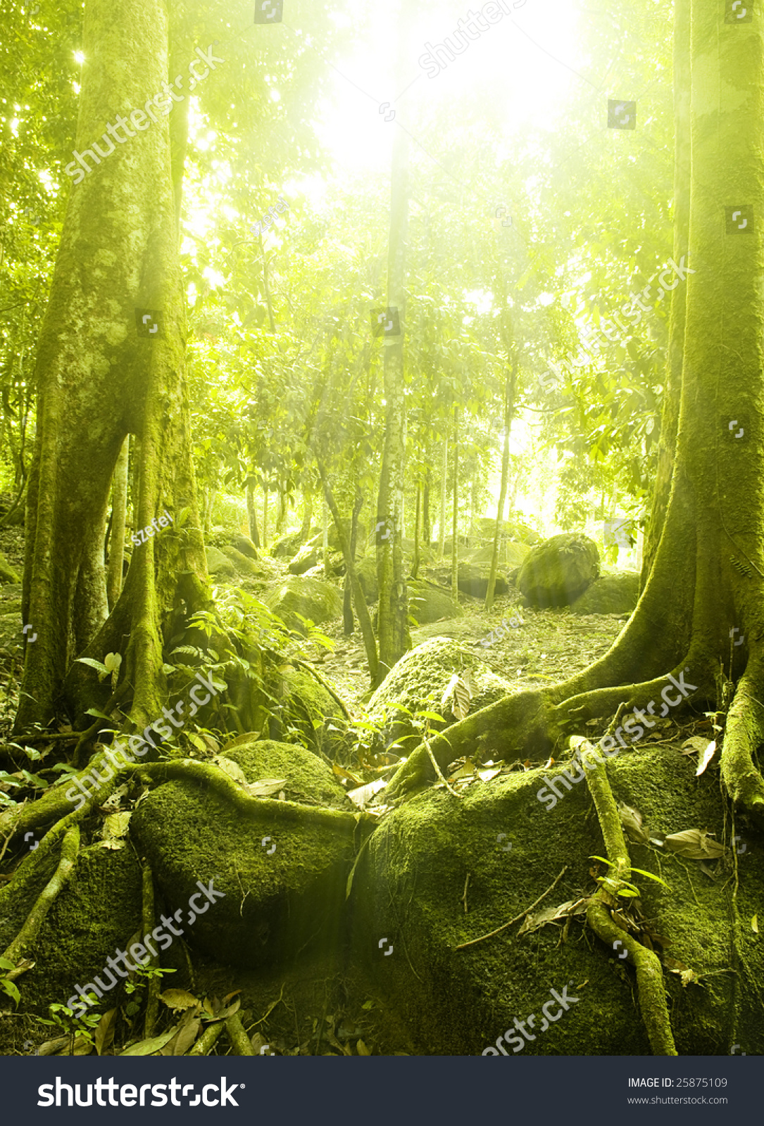 壁纸 风景 植物 桌面 1085_1600 竖版 竖屏 手机