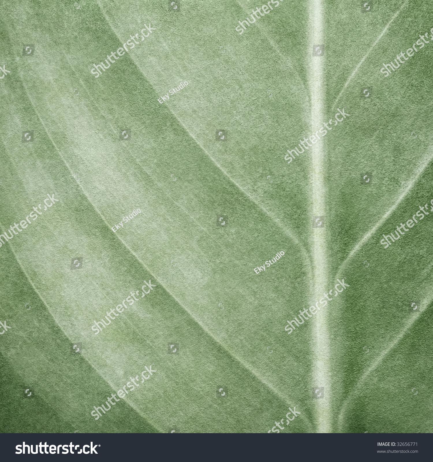 树叶的图案画背景