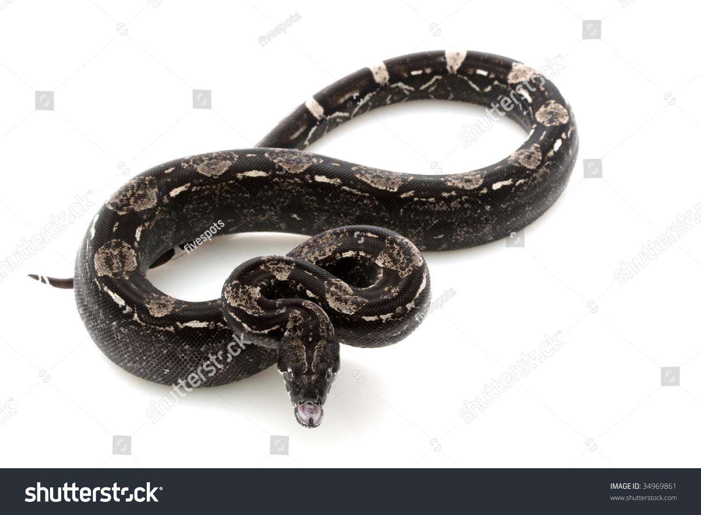 动物 蛇 1500_1100