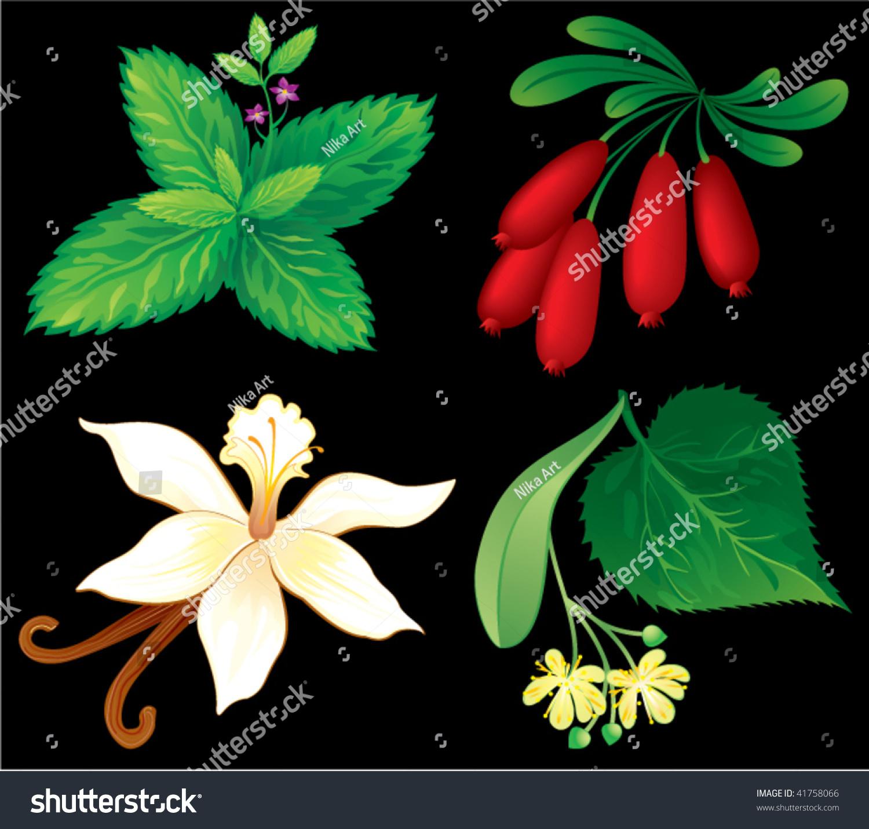组芳香植物-插图/剪贴图