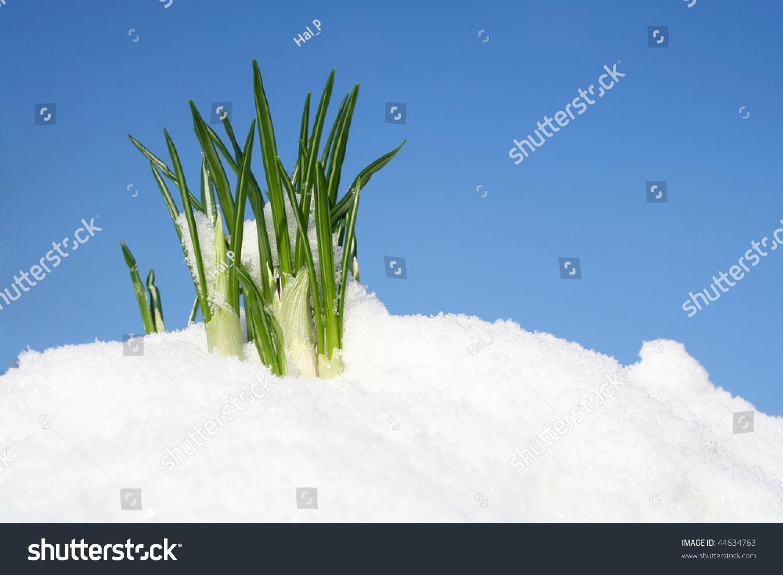 雪中花山泉水水桶宣传图