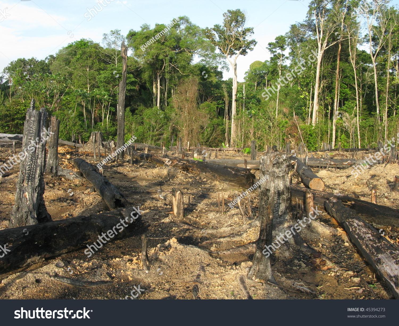摧毁了亚马逊热带雨林(20/01/2010拍摄)
