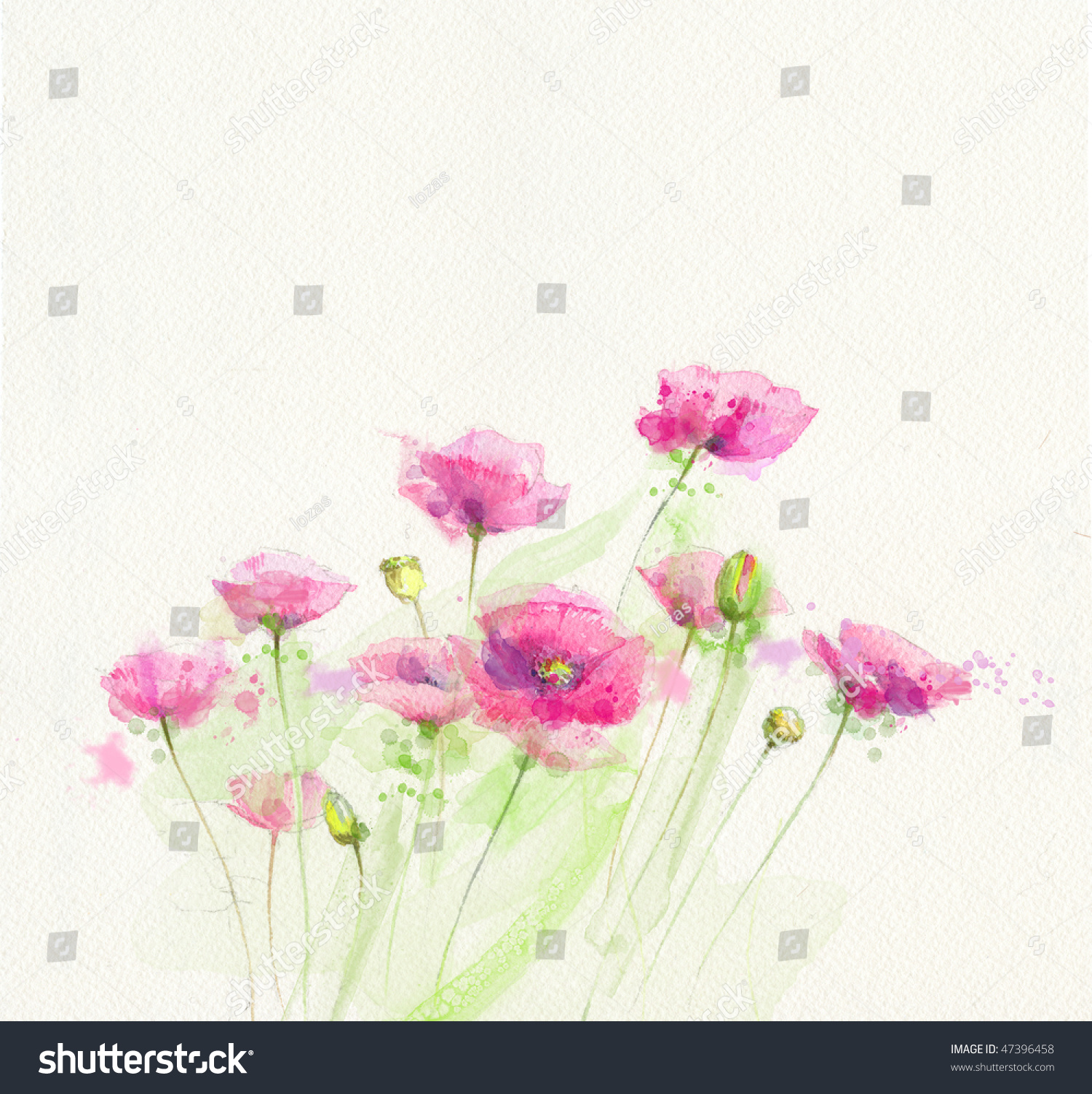 画水彩画的罂粟花-插图/剪贴图,自然-海洛创意()-中国