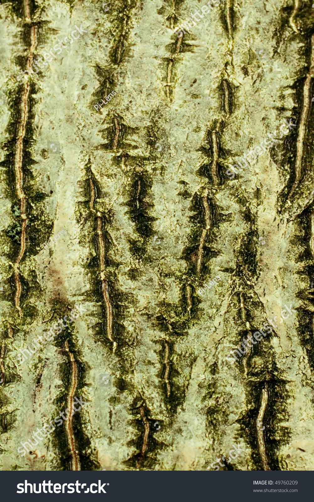 背景树皮常见的胡桃木