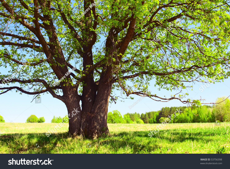 风景大树微信头像