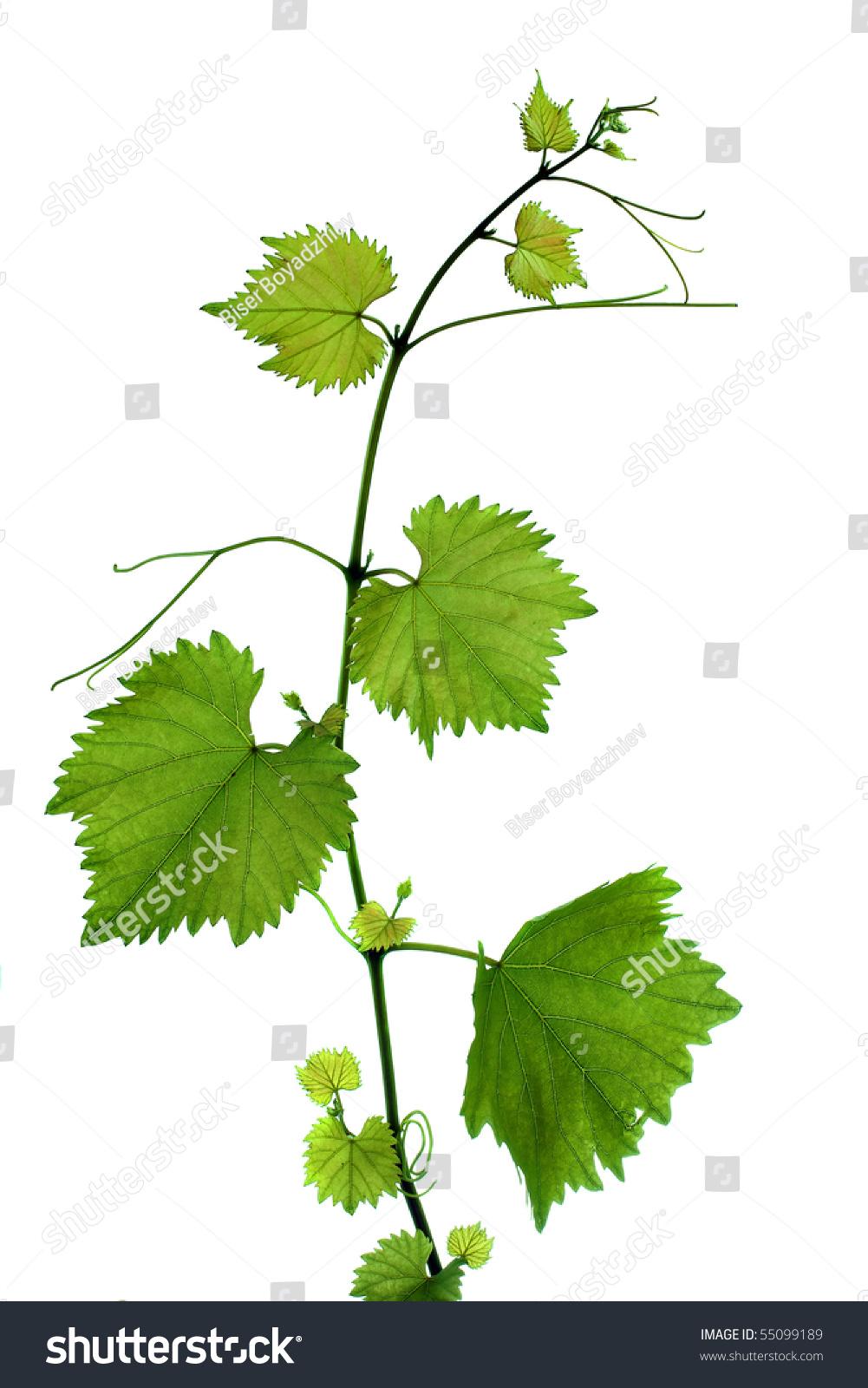 微信头像风景叶子