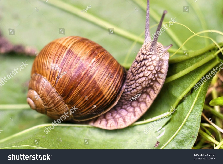 蜗牛爬,从自然图像系列:蜗牛在叶子上-复古风格