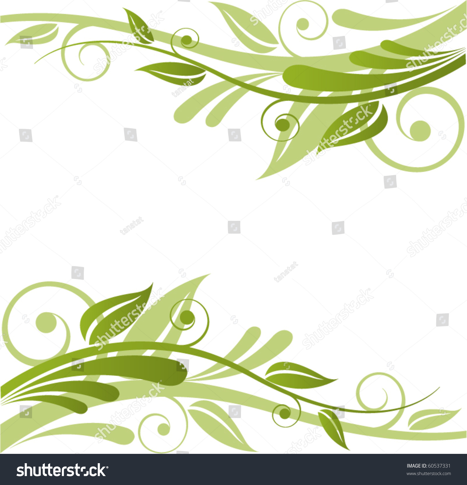 单子叶植物叶表皮显微结构图