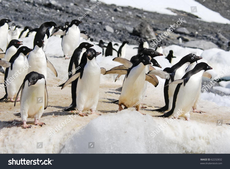 冰企鹅同学会旗帜